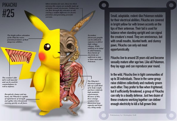 Anatomy of a pokemon