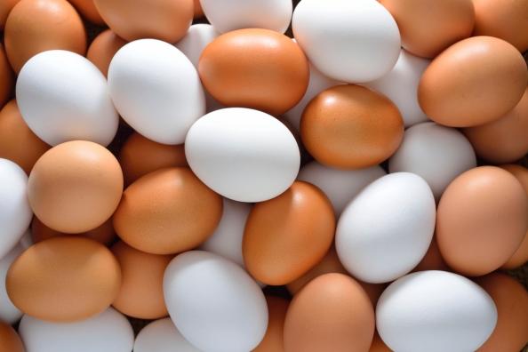 Teaching ideas - eggs